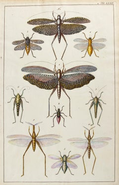 Insect Engraving