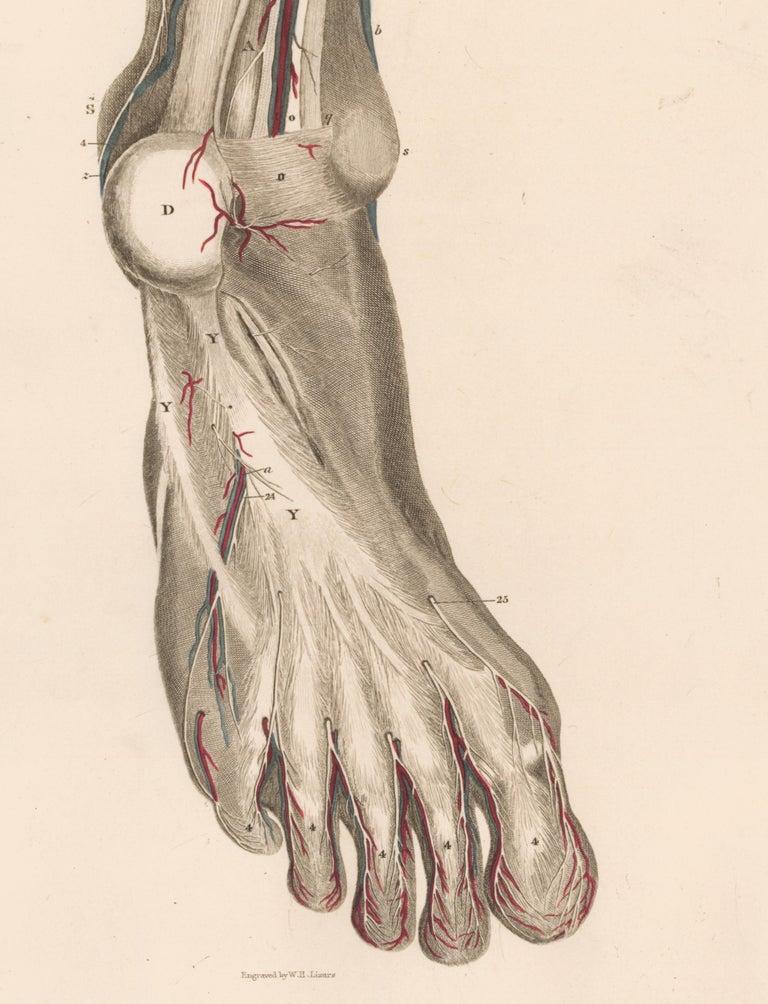 Anatomical Engraving of a Human Lower Leg - White Figurative Print by John Lizars