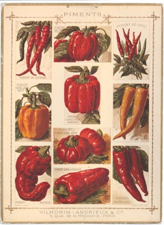 French Pepper Poster