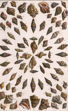 Hand-Colored Shell Engraving