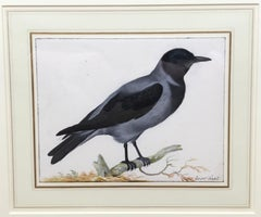 Study of a Crow by Johannes Bronckhorst