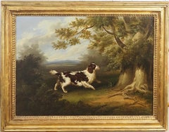 A Spaniel in a wooded landscape