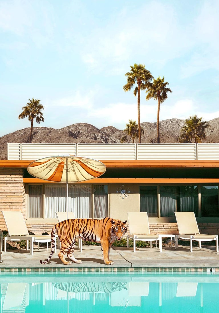 Paul Fuentes Landscape Photograph - Pool Party Tiger - signed edition print