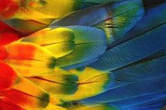Plumas Colores - Guacamaya, 2018, Extra Large Color Archival Pigment Print
