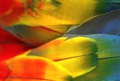 Plumas Colores - Guacamaya, 2018, Large Color Archival Pigment Print