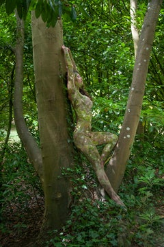 Women and Trees VI