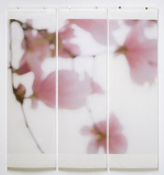Magnolia triptych