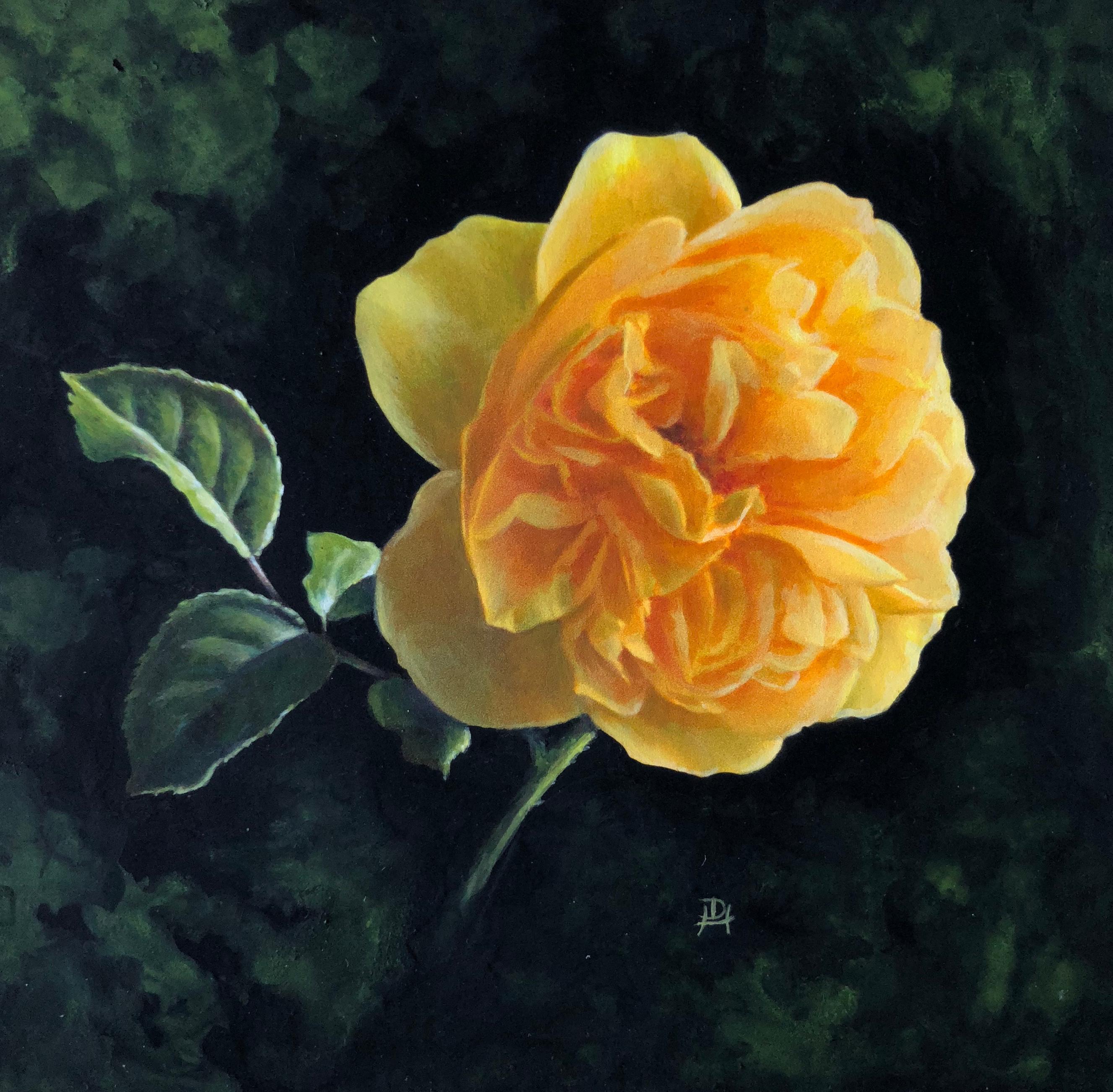 f6cbaa62e Denise Haywood - Iris original botanical flower miniature painting,  Painting at 1stdibs