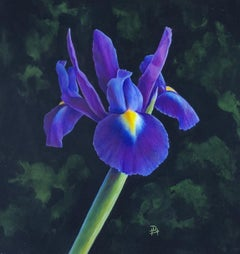 Iris original botanical flower miniature painting