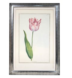 Pierre Joseph Buchoz, A set of 6 Tulips, Engraved hand-colored plates, 1781
