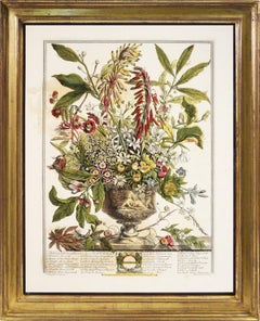 Rober Furber, Twelve months of Flowers, Floral Calenda, hand-coloured, 1730