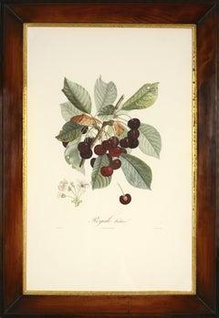 POITEAU, Traité des arbres fruitiers: A set of  four cherries