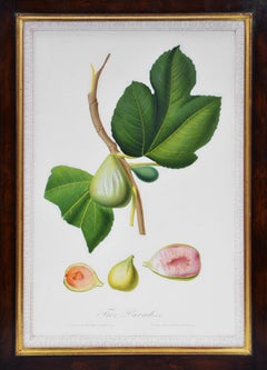 Giorgio Gallesio, Set of Six Figs, 1817