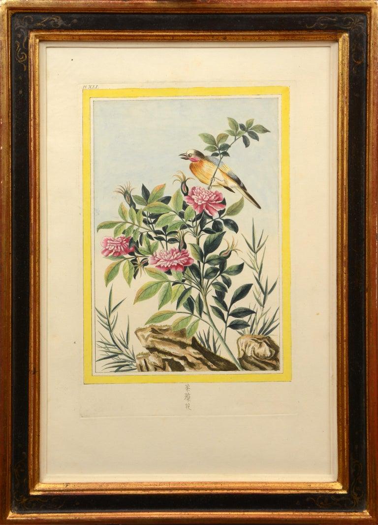 Pierre Joseph Buchoz Landscape Art - Les Fleurs les plus belles et les plus curieuses: a set of 12 Chinese flowers.
