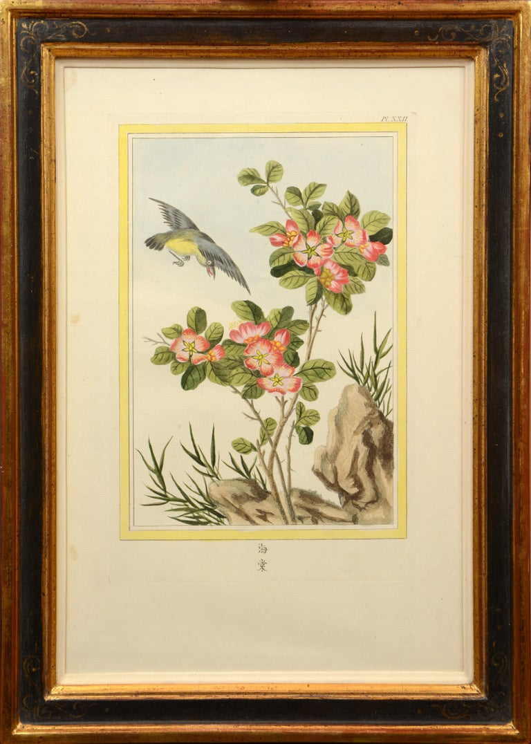 Twelve hand-coloured engraved plates with printed Chinese captions. Overall dimensions: 49.8 by 36 cm, framed and glazed.