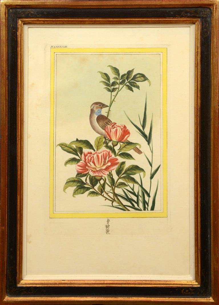 Les Fleurs les plus belles et les plus curieuses: a set of 12 Chinese flowers. For Sale 8