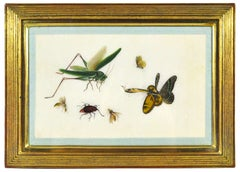 China Export Watercolours on Pith Paper, a Set of Twelve Insects.
