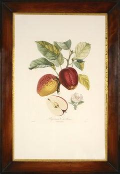 POITEAU, Traité des arbres fruitiers: A set of  four Apples