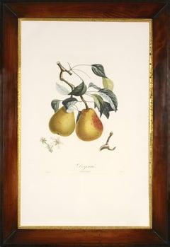 POITEAU, Traité des arbres fruitiers: A set of  six Pears