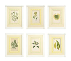 Set of Six Botanical Prints