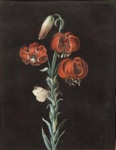 A Turks Cap Lily