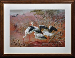 White Storks. Large European African Asian Bird.Victorian Watercolor Ornithology