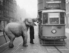 Hungry Elephant, 1930s, Silver Gelatin Print, Archival, Limited, Street, Animal