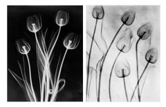 X-Ray Tulips Diptych, Circa 1910, Acrylic Mount prints, Black & White, Abstract