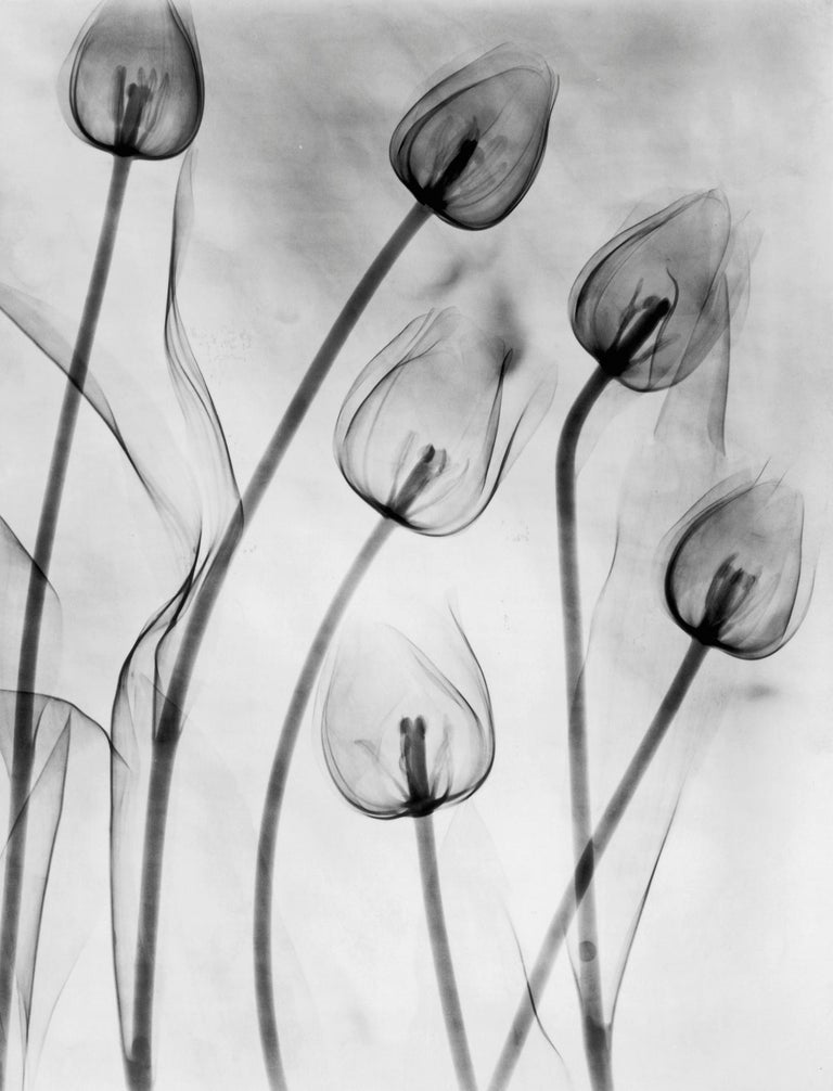 X-Ray Tulips Diptych, Circa 1910, Acrylic Mount prints, Black & White, Abstract For Sale 2