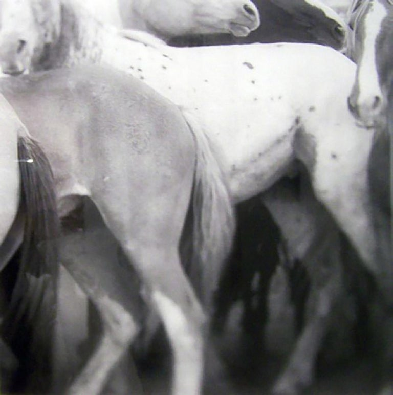 Audrey Hall Black and White Photograph - Fast Break Miles City Horses II