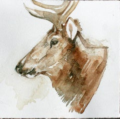 Wapiti in Profile