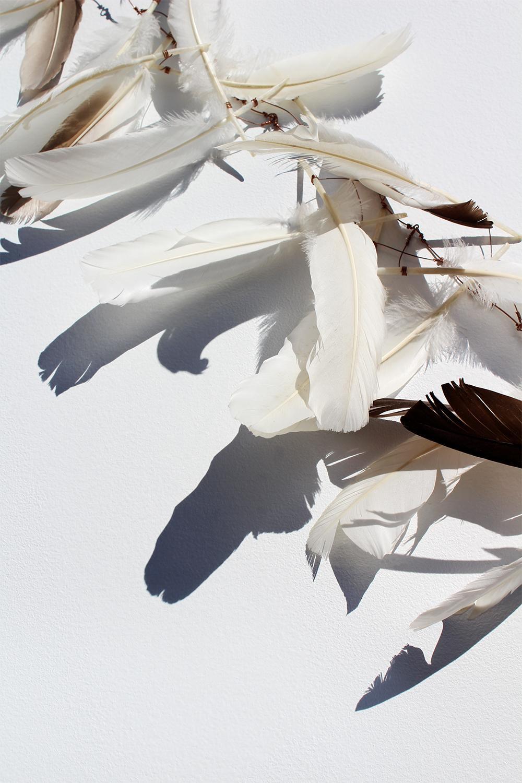 """Plume Umbra, I"", print, feathers, shadows, blue, copper, orange, gold"