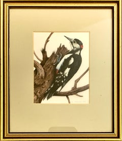 English 20th century study of a woodpecker bird