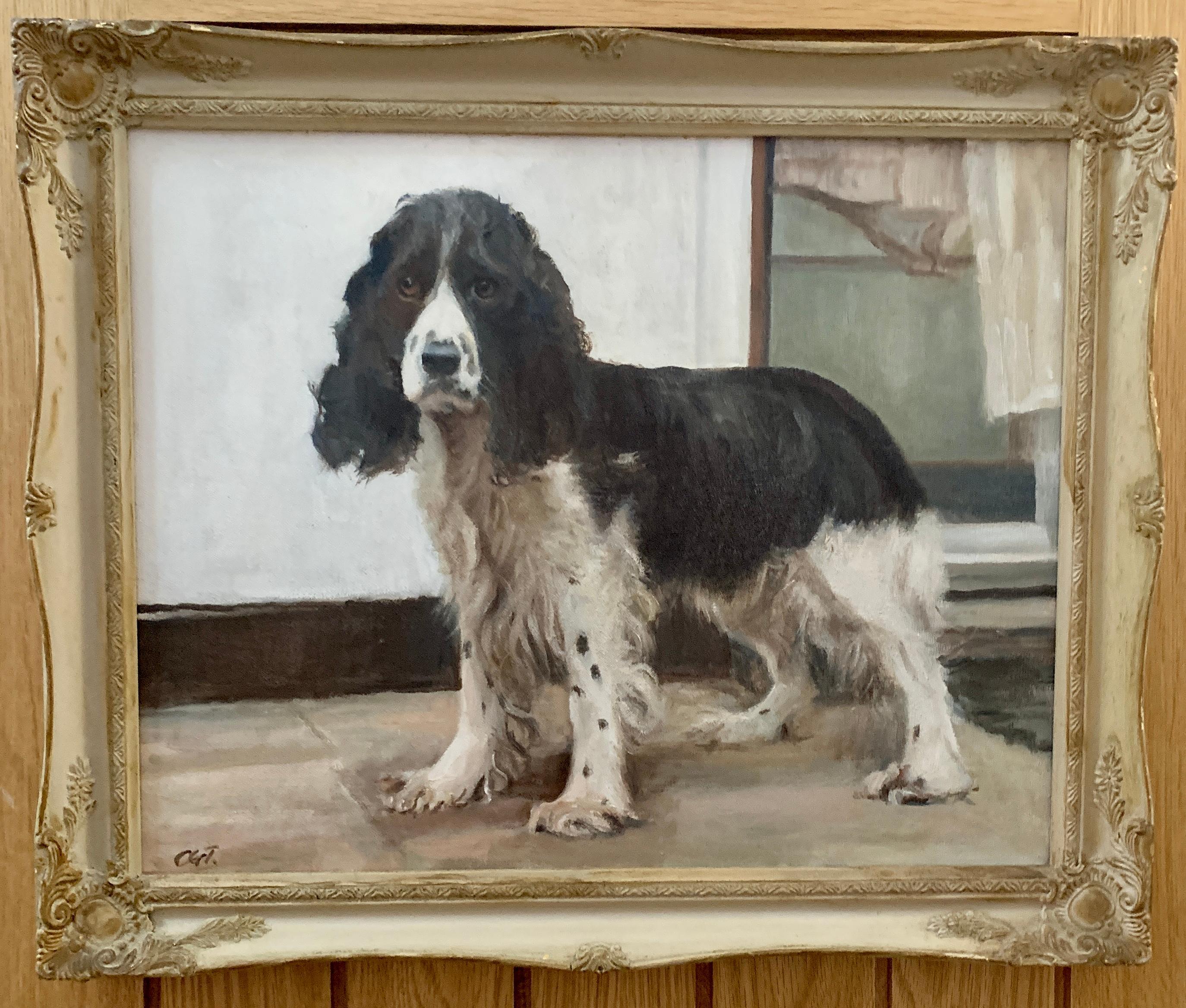 20th century English portrait of a standing Springer Spaniel dog.