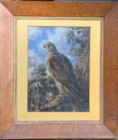Early 20th century English oil of a Falcon standing a a tree branch