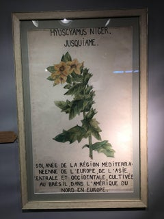 Belgium or French Watercolor studies of botanical flowers from an University
