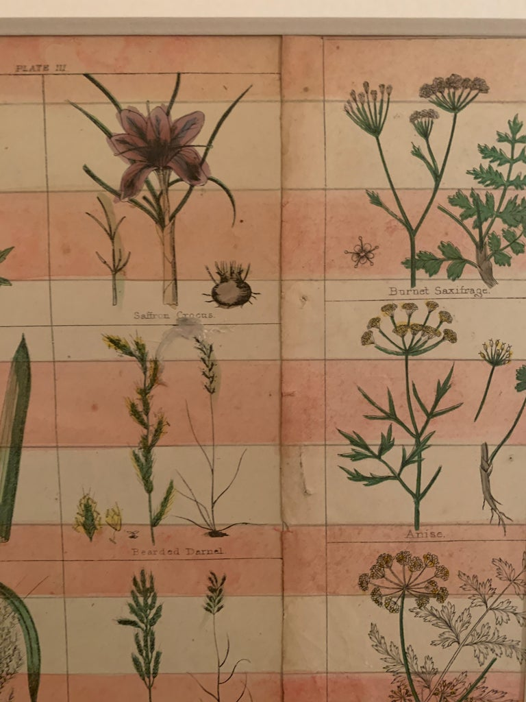 American flag collage with 19th century botanicals hand colored in watercolor  For Sale 3