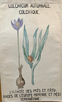 Early 20th C French Watercolor, botanical flowers from an University collection
