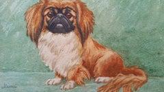 "English School 20th Century Pekingese Dog ""Mimi"""