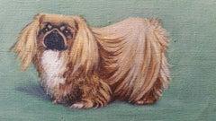 English School Mid 20th Century Oil Painting: Pekingese Dog
