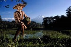 Japan: Rice Field in Oshino Village, near Mt. Fuji