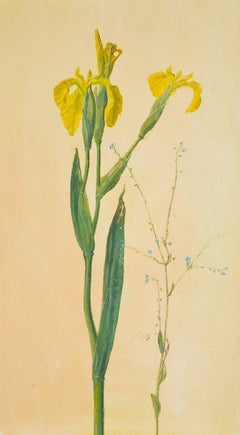 Yellow Iris with Forget Me Nots