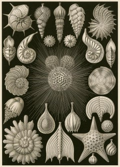 Art Forms in Nature (Plate 2 - Globigerina. Rounded Shell Protozoa)