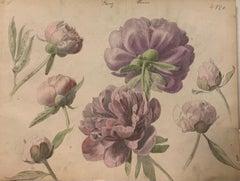 """""""Peonies""""Flowers, Herbarium,Watercolor,1885 cm. 25 x 32 Framed cm.43 x 33"""