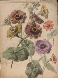 """Zinnias flowers""Herbarium,Watercolor,1885 cm. 32 x 25 Framed cm.33 x 43"