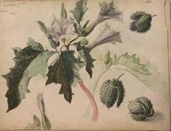 """Flowers"" Herbarium,Watercolor,1885 cm. 25 x 32  Framed cm.43 x 33"