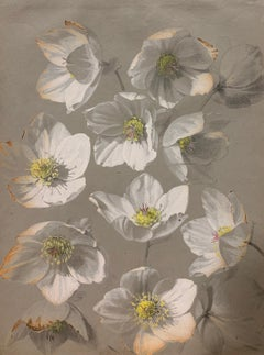"""White flowers""  Herbarium,Watercolor,1885 cm. 25 x 32 Framed cm.43 x 33"