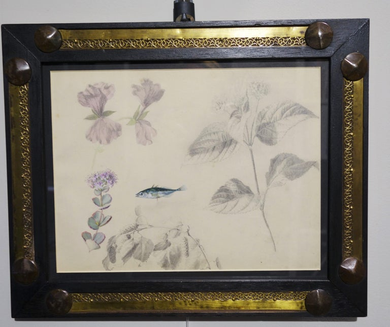 "Unknown Still-Life - ""Botany study (and clandestine fish)"" watercolor  cm. 28 x 20 1890 ca"