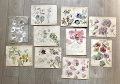 Book of botany study ,Flowers,  50 works,  watercolors   cm. 25 x 32       1885