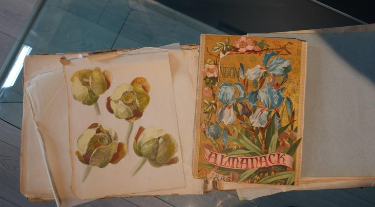 Book of botany study ,Flowers,  50 works,  watercolors   cm. 25 x 32       1885 - Art Deco Art by Unknown